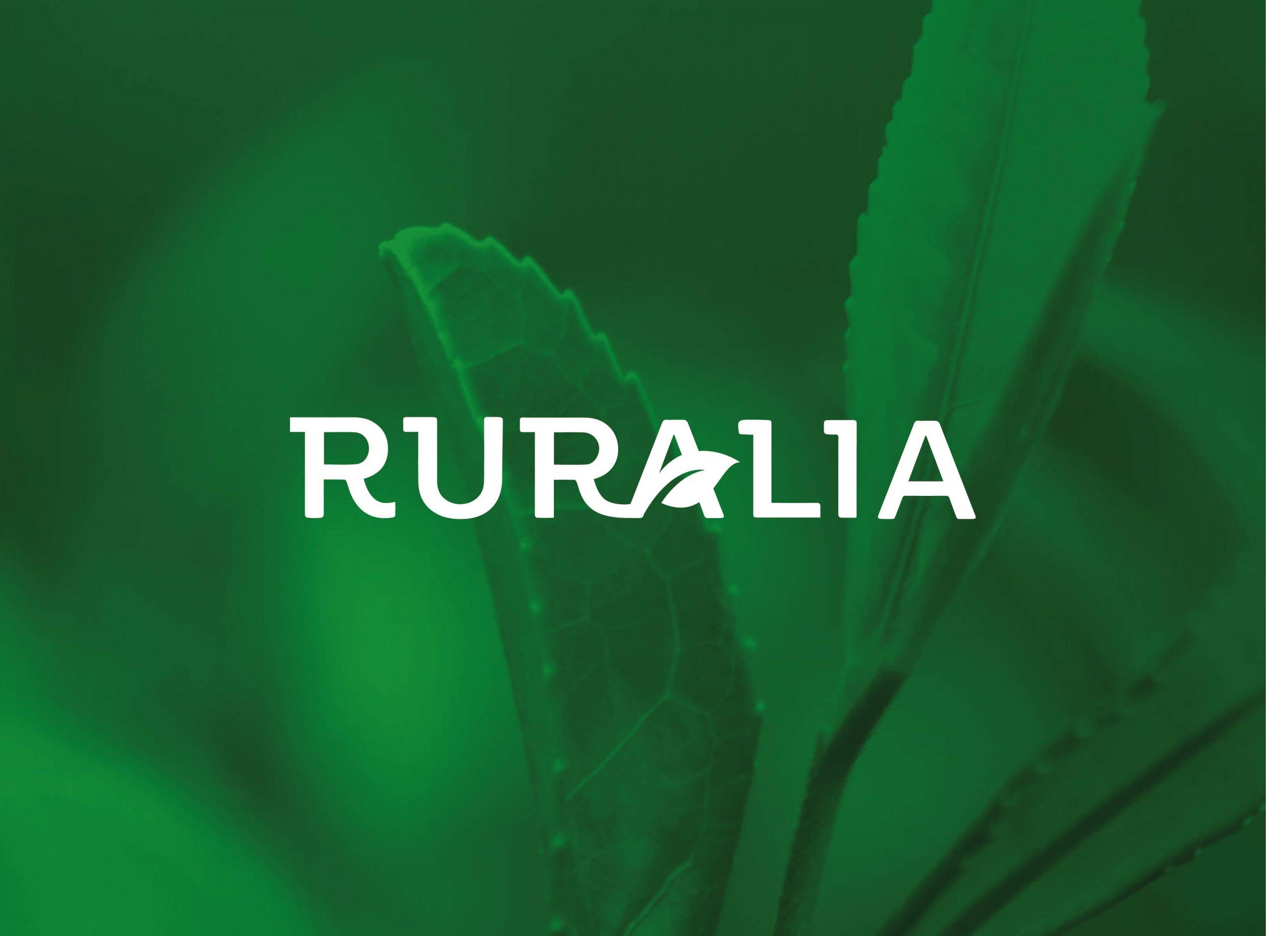 RURALIA_Mesa de trabajo 1